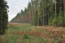 Противопожарный разрыв от лесного массива